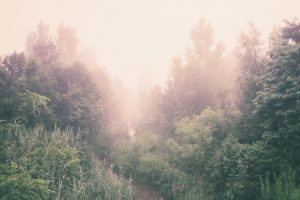 forest-871943_1280